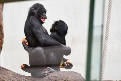 Affengeiler Sex hilft nicht immer